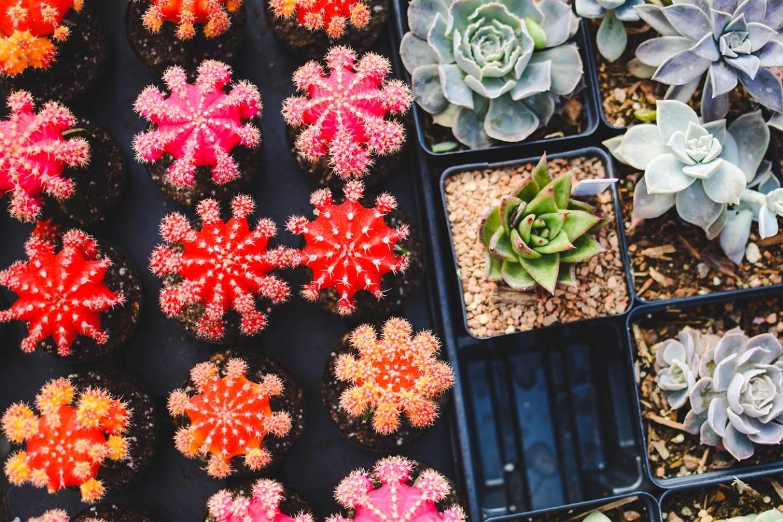 ヤフオクで売れる植物